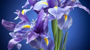 Tipos de perfumes: Floral. Pressentia