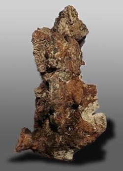 madera de agar_agarwood